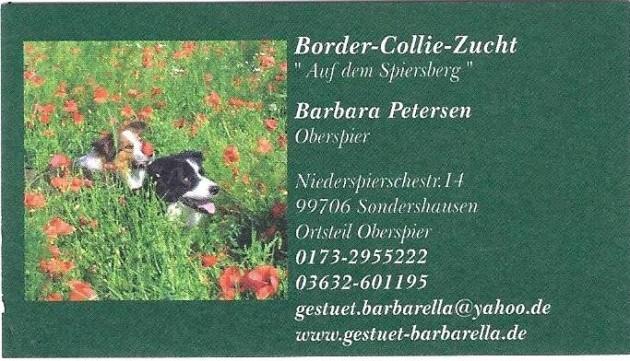 Hundezucht, Border Collie, Hunde